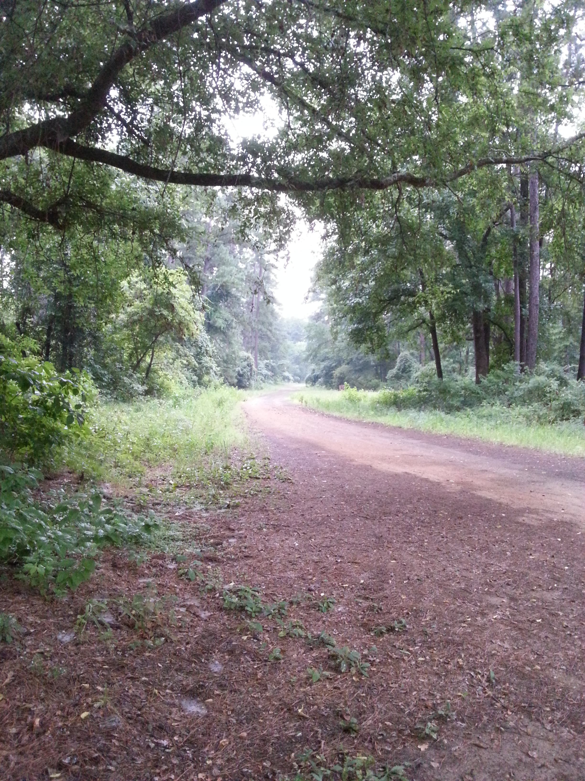 The gravel/dirt road leading out of my campsite back to civilization
