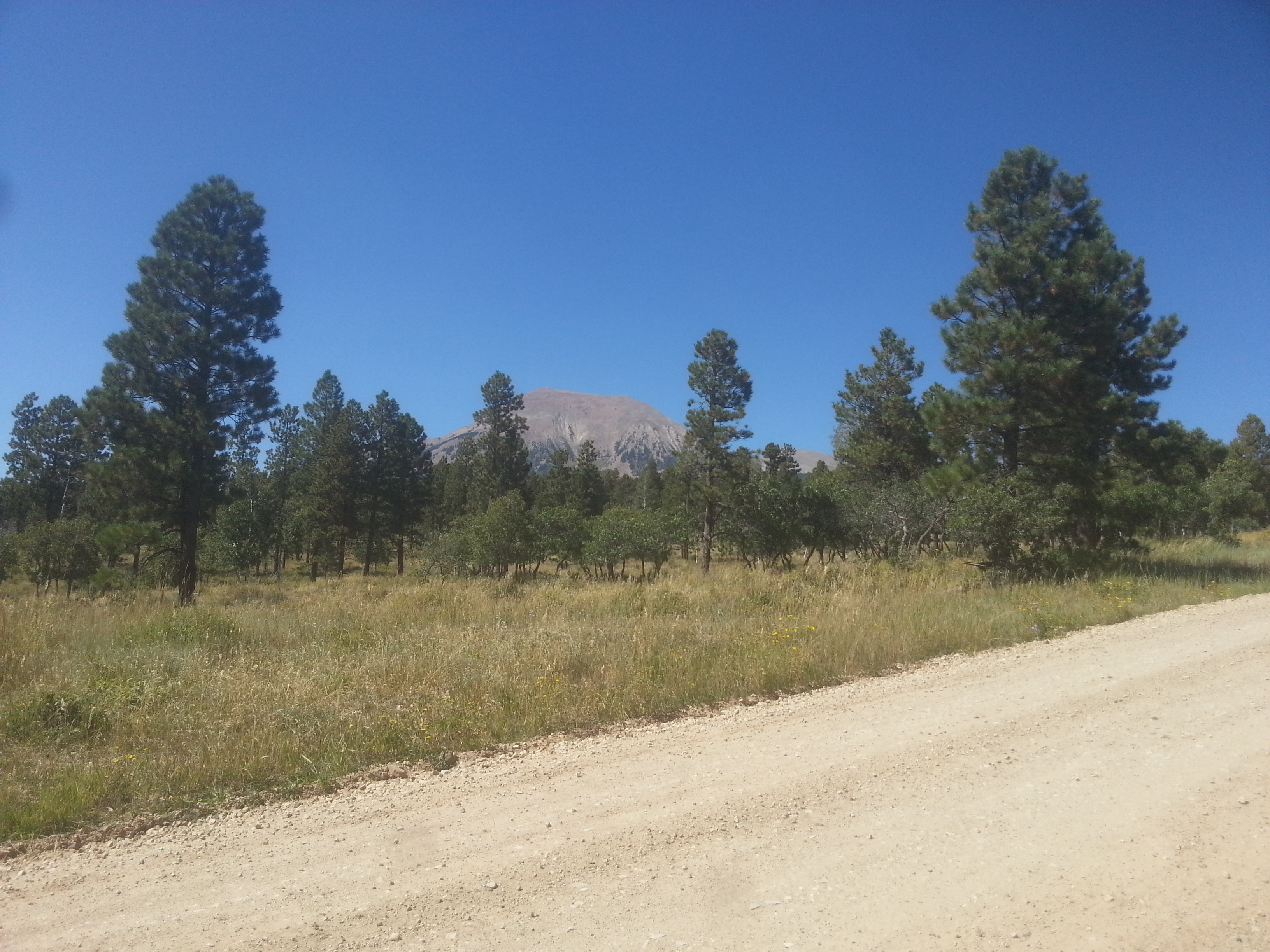 getting closer to the mountain, and the desert brush gives way to forest at elevation