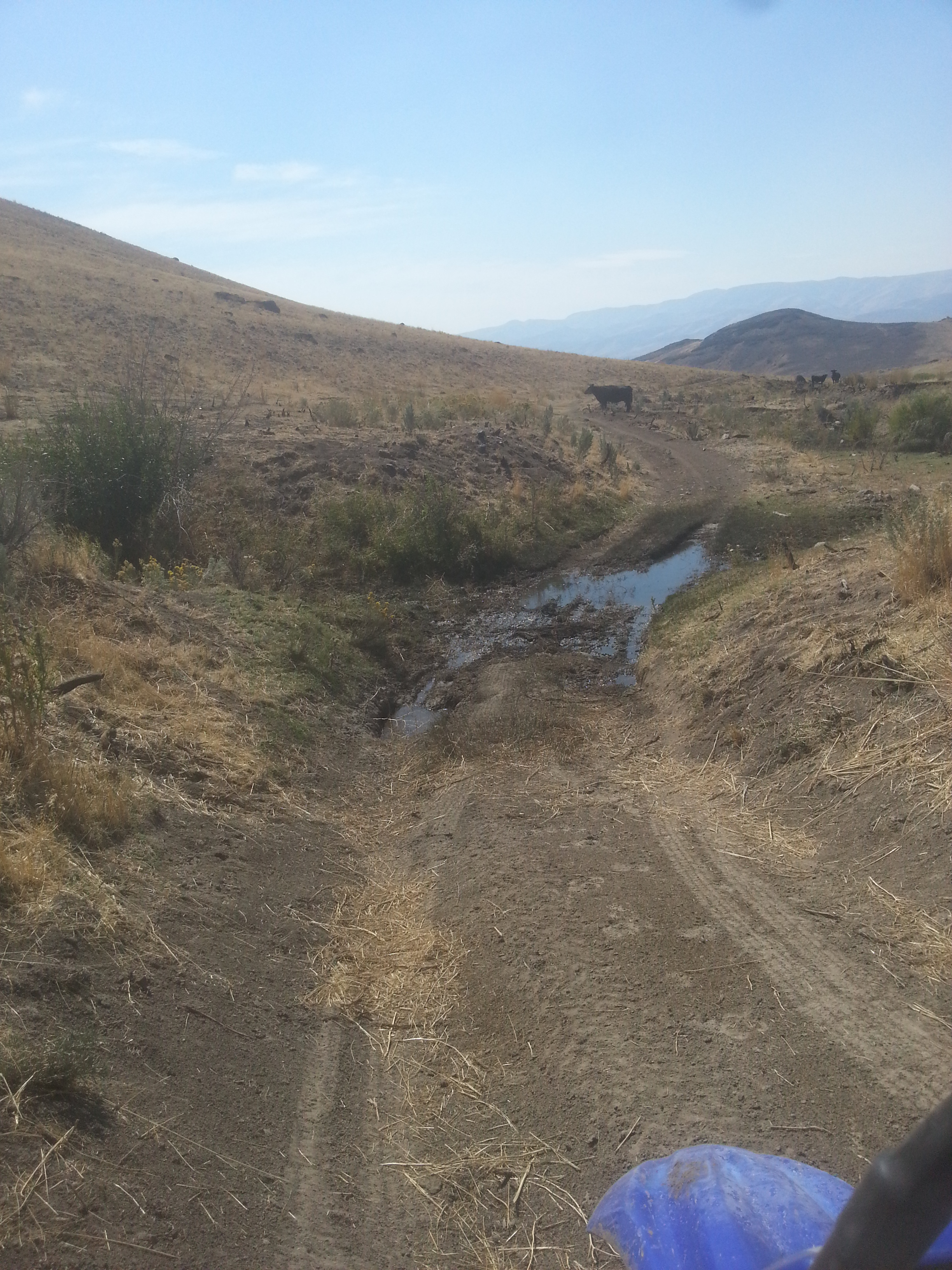 muddy watering hole plus cow obstacle